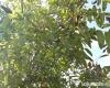 Curtesti, Botosani, Romania, ,Teren,De vanzare,2515
